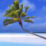 Budget 2009: changes to UK Furnished Holiday Lettings rules