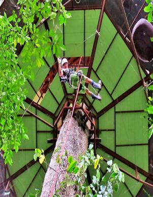 Tree-house-holidays