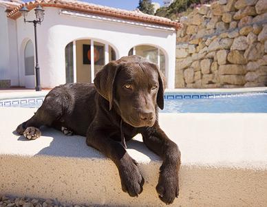 Vacaciones-perro