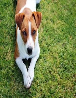 Dog-friendly-rentals
